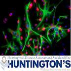 Huntington's Disease Association (Auckland) Inc's avatar