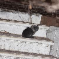 Community Cat Coalition Trust (Supported by the SPCA)