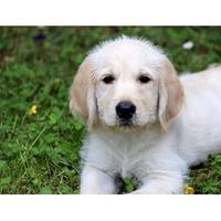 NZ Epilepsy Assist Dogs