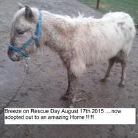 Mini Ha Ha Horse Haven Charitable Trust