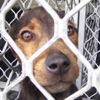 ARAN Animal Rescue NZ
