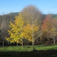 Friends of Roland's Wood Charitable Trust