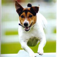 Terrier Race Against Time