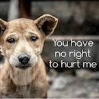 Pixies Animal Rescue Trust's avatar