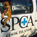 Cook Islands SPCA's avatar