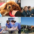Massey University School of Veterinary Science's avatar
