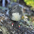 Abel Tasman Birdsong Trust's avatar