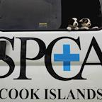 Cook Islands SPCA's avatar