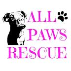 All Paws Rescue's avatar