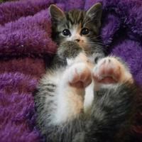 Queenstown Cat Rescue