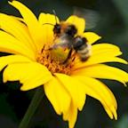 New Zealand Bumblebee Conservation Trust's avatar