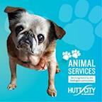 Hutt City Council's avatar
