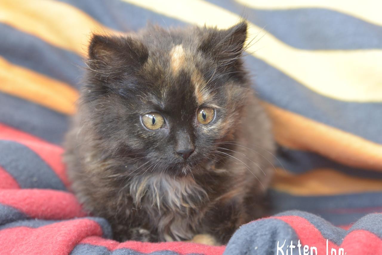 The Kitten Inn Givealittle