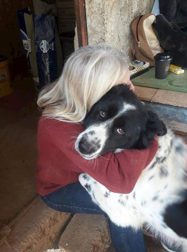 Greek Dog Rescue - Updates - Givealittle