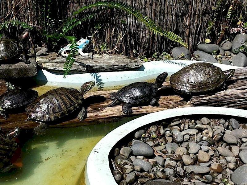 Auckland Fish, Turtle and Reptile Rescue - Givealittle