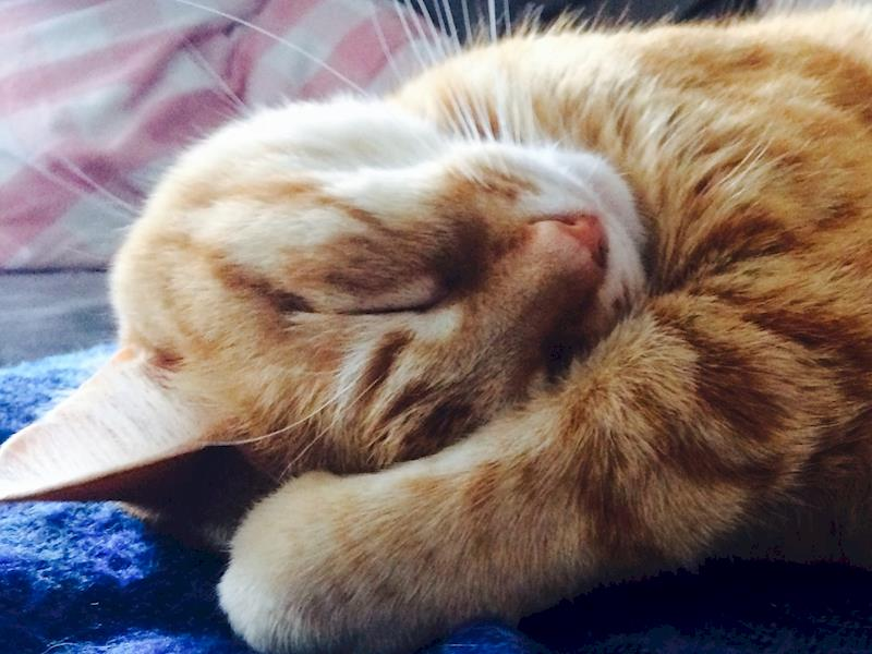 Please help save our lovely chubby ginger nugget! - Givealittle