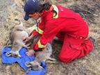 Veterinary wildlife rescue and treatment - Australian bushfires - VICTORIA's avatar