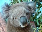 Raise Funds for the Mallacoota Wildlife Shelter/Australian bush fires's avatar