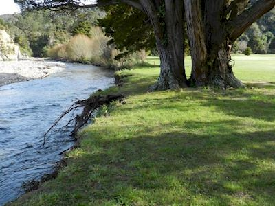 Save the totara trees and river bank protection of te for Landscaping courses nz