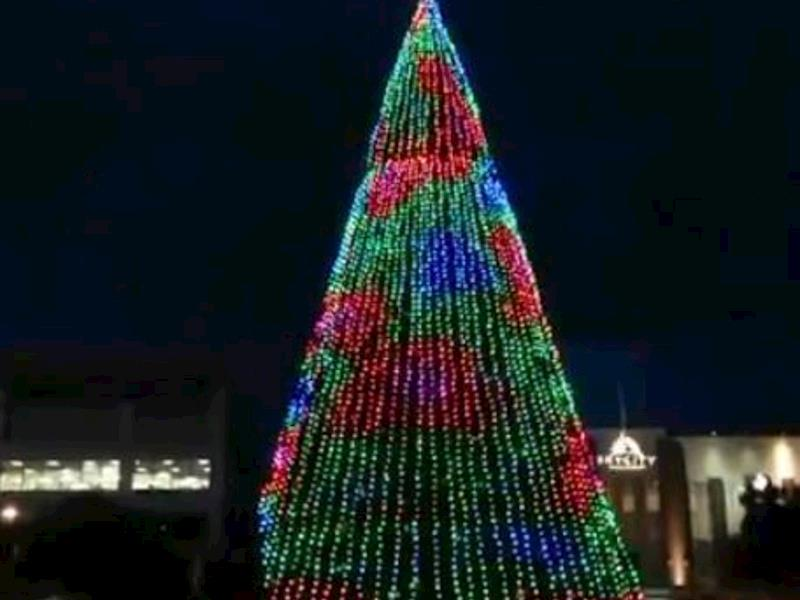 this tree is now 10 years old thousands of people come from around the region to garden place in the centre of hamilton at christmas to see the tree and - Largest Christmas Tree